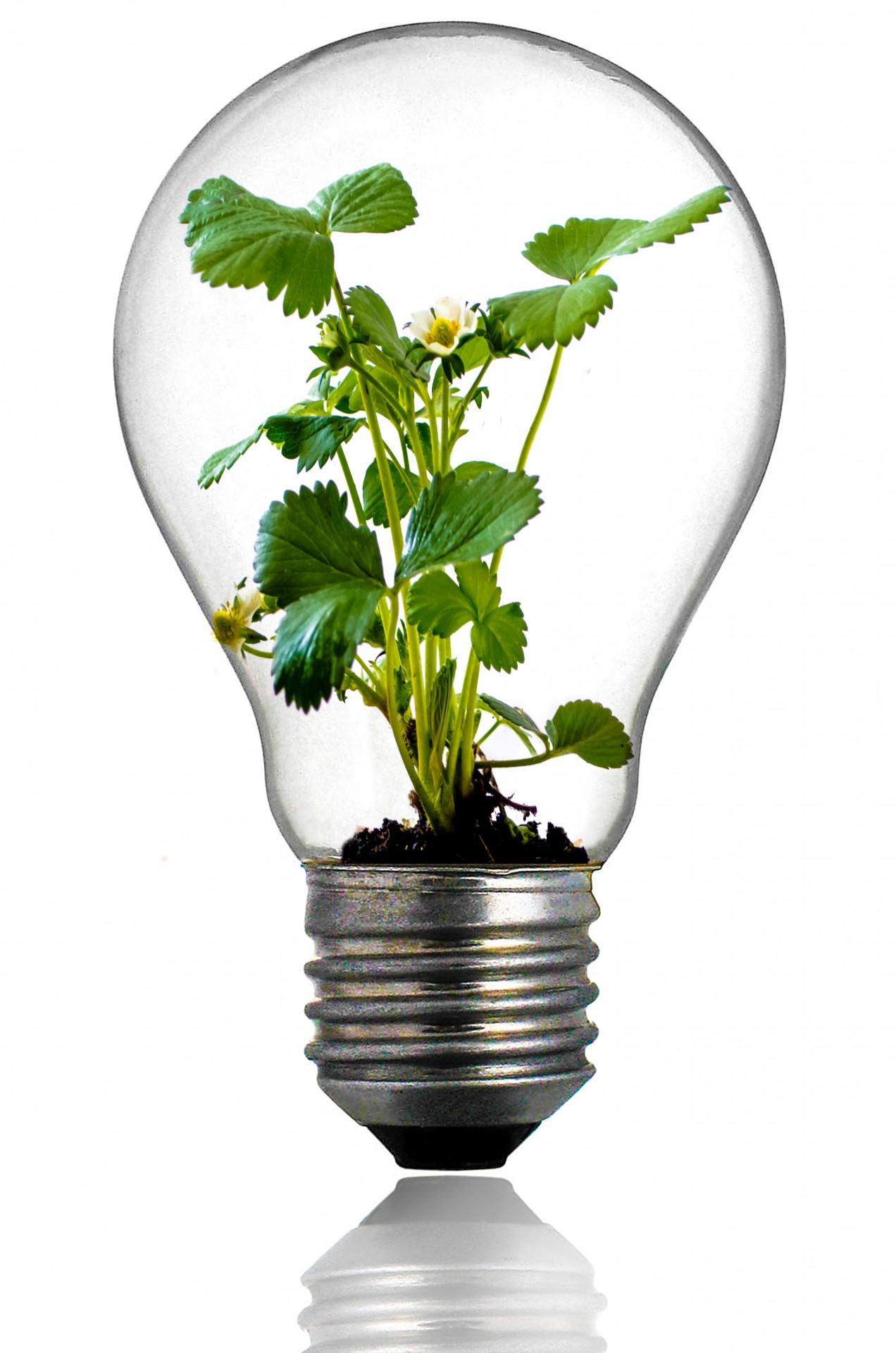 electricite-ecoresponsable