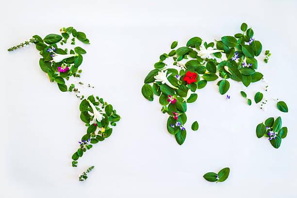 Carte du monde réalisée avec des feuilles et des fleurs